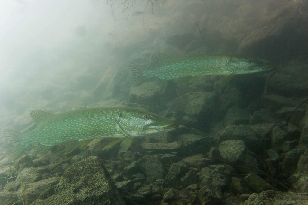 Tauchen Walchensee